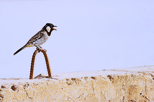 bird_on_wall
