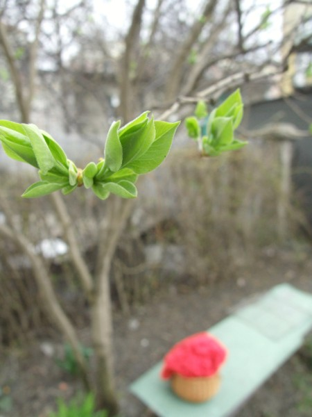 Budding lilac leaves