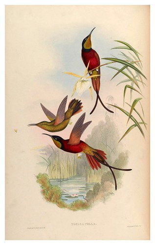 009-An introduction to the Trochilidae or family of humming-birds- Vol 2- 1861-John Gould
