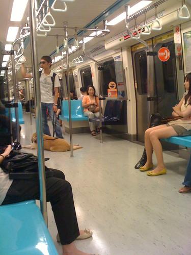 guide dogs x MRT。捷運上的導盲犬。