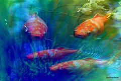 Collage111-001 Koi Carp fantasy , from pictures taken at botanical garden, Gardone Riviera (profmarilena) Tags: koi carps collage artwork art