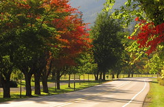 If you don't have a destination...any road will take you there. (Marjanpoet) Tags: road autumn trees red mountains green curving northerncascades