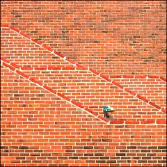Duckhunt (Tailer Ransom) Tags: canon rebel xsi tailer ransom minimalism ministract architecture abstract brick wall stairwell stairs rectangles geometry light exposure contrast juicy delicious explore frontpage 7 colorful bricks colors red tinge crack concrete black puzzle mind twisting convoluted perspective angle camera tilt frame neat beach minimal boston most interesting flickr popular ranking rank interestingness views favorite best everyday green blue orange yellow magenta purple puppy dog cute kitty brickwall tailerransom 7d eos 5d d700 nikon sigma lockwood topabstract