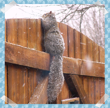 Squirrel wondering if the grass is really greener over there
