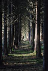 [フリー画像] [自然風景] [樹木の風景] [森林/山林] [スペイン風景]       [フリー素材]