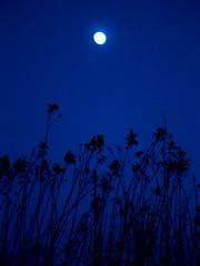 Moon in grass (raphic :)) Tags: blue sky moon grass lumix panasonic niebieski ksiyc trawa niebo raphic fz8 dmcfz8