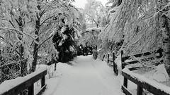 B&W Waldweg im Winter (mikiitaly) Tags: bridge schnee trees winter snow alberi casio neve zaun brücke inverno bäume exilim südtirol altoadige waldweg cammino coth rockpaper colorphotoaward theperfectphotographer multimegashot exfh20 ponticiello platinumbestshot