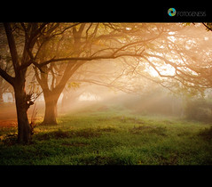 (colours of my soul) Tags: morning green nature fog photo heaven earlymorning greens environment greenery pleasant praveen naturephotography bhel foggyday enivronment fotogenesis coloursofmysoul rampraveen fotogenesis hyderabadfotogenesis