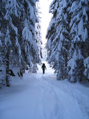 Norway of life (Nicolas Doreau) Tags: trees snow norway forest pins arbres neige fort sapin norvege fortdenorvge norwigianforest