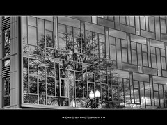 Mercy Corps World Headquarters Portland Oregon- HDR B/W (David Gn Photography) Tags: city winter bw reflection tree architecture oregon walking portland blackwhite downtown cityscape tour structure hq oldtown hdr skidmore mercycorps worldheadquarters mywinners canonpowershotsx1is