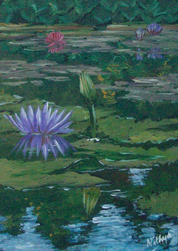 Waterlily #14