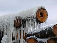 Winter Coat (kfhagar) Tags: winter ice al alabama icicles lumberyard fz50 kfhagar panasonicluimx rogervilleal