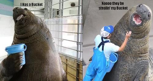Lolrus wants his bucket