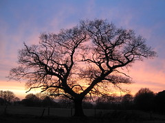 The Old Oak Tree (Lune Rambler) Tags: old pink blue trees winter sunset sky tree nature february soe oldoaktree lunevalley platinumheartaward goldstaraward saariysqualitypictures flickraward platinumbestshot platinumpeaceaward doublyniceshot doubleniceshot lunerambler tripleniceshot shutterbox~~ mygearandme mygearandmepremium mygearandmebronze mygearandmesilver mygearandmegold mygearandmediamond 4timesasnice 5timesasnice 7timesasnice