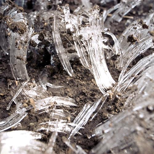 Ice Crystal Mushrooms 2