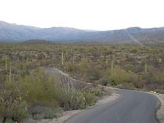 20100202-060523 (Bold Searcher) Tags: arizona saguaronationalpark