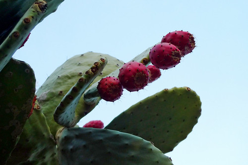 Prickly in Pink