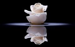 007313 ([Diego Baroni]) Tags: stilllife rose reflections rosa riflessi sigmaapomacro180mmf35exdgifhsm ilroseto