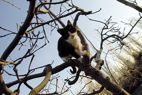 gato-granada