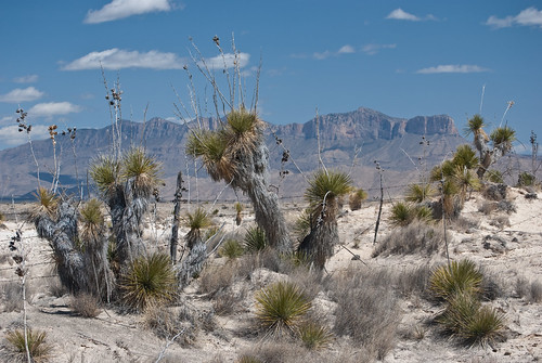 Cactus and the Guadalupe Mountains