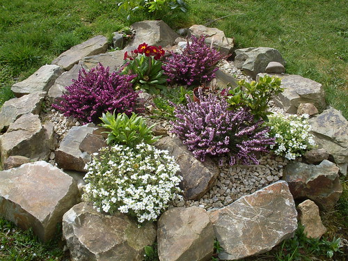 Blooming rockery by Owl lover