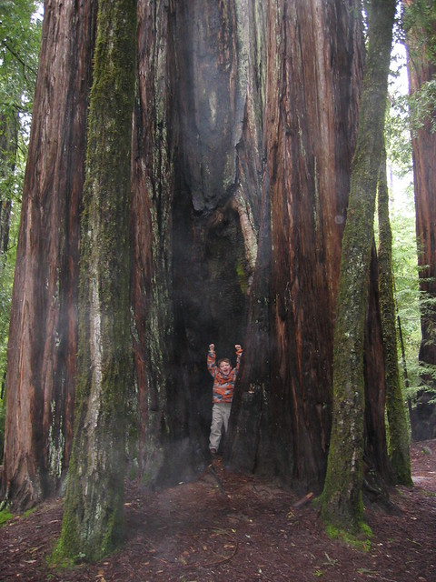 a boy and a redwood tree