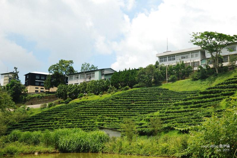 【南投】阿薩姆紅茶的故鄉。貓蘭山步道之旅DSC_1720