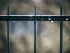 After the rain - HFF! (A_Peach) Tags: anastigmat g3 availablelight drop fence mft m43 lumix panasonic microfourthird micro43 apeach anjapietsch vintagelens manualfocus adaptedlens kodakanastigmat63mmf27cine dof bokeh hff drops raindrops rain