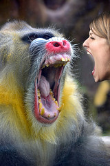 Primate Antics (swong95765) Tags: mandrull woman mouths faces human animal confrontation breath yell