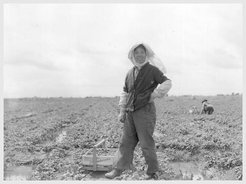 Japanese Strawberry Farmer Before Internment Dorthea Lange Photographer