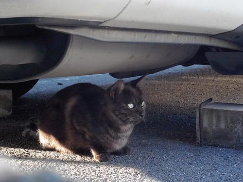 Today's Cat@20091021