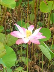 UG-legon-garden (Open.Michigan) Tags: ghana 2009 ug