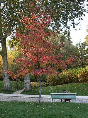 jardins de bercy.jpg