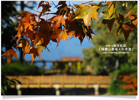 【賞楓景點】台灣的賞楓聖地~福壽山農場