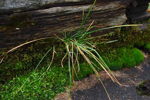 Mossy Weeds II
