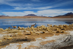 Salar de Uyuni (Boring Lovechild) Tags: mountains southamerica lakes bolivia lagos saltflats montaas salardeuyuni sudamrica