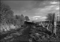 Road and Fence - Near Ballyfarnon (Phil Burns) Tags: road trees ireland sky blackandwhite bw gimp olympus e3 posts roscommon ufraw geevagh