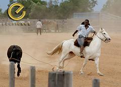 IMG_6261 (Edu Rickes) Tags: brazil horses brasil caballos rodeo cavalos rs riograndedosul gaúchos gaúchas beautifulshots piratini gineteada canon450d brazilianphotographers fotógrafosbrasileiros tirodelaço todososdireitosreservados fotógrafosgaúchos culturagaúcha edurickes belasimagens rodeiogaucho edurickesproduçõesfotográficas canonrebeldigitaleosxsi copyright©2010 fotografiaslegais
