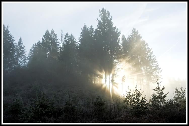 sun_rays_1