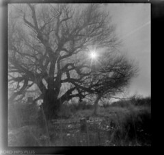 December Afternoon (Crunchy Footsteps) Tags: arizona film holga passages pinhole sanpedroriver caffenolc aot2010contest