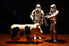 Imperial Requisition #8 - Give milk or die (Stfan) Tags: animal toy actionfigure cow milk starwars stormtroopers stormtrooper lait figurine jouet vache hasbro imperialrequisition stormtroopers365
