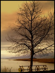 winter tree in  lake Prespes Greece (maios) Tags: travel winter sky cloud lake tree water landscape greek photography photo flickr foto photographer greece macedonia fotografia manikis maios iosif  prespes heliography              mikrolimni