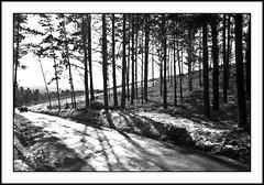 Carretera nevada. Snow-covered road. (bica12bic) Tags: winter blackandwhite snow blancoynegro forest spain carretera nieve galicia invierno sombras biancoenero blancetnoir sadows nikond90