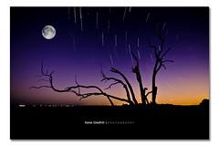 Urban Sky And The Symphony Disguise ([ Kane ]) Tags: moon tree night stars photography dusk spin australia brisbane stack qld kane cp startrail gledhill sigma1020 50d kanegledhill celestialpoint kanegledhillphotography