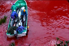 Stop Japs from slaughtering dolphin (Eyes of sky) Tags: japan japanese dolphin slaughter  disgrace taiji thecove
