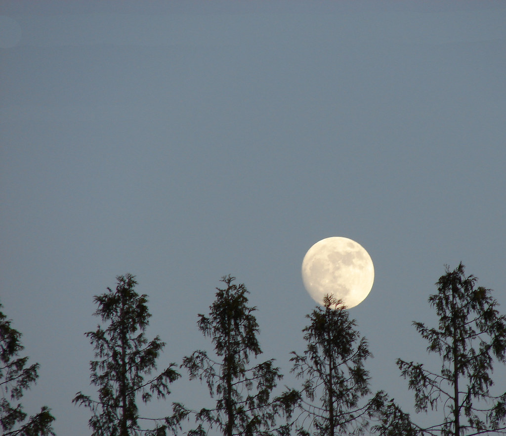 Moon over the trees