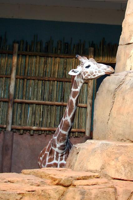 zoo 278