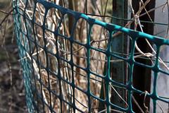 garden fence 006