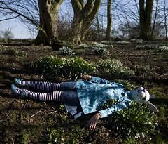 184/365 The Rabbit Run (sosij) Tags: uk england selfportrait rabbit bunny canon spring woods alice snowdrops 5d hertfordshire aliceinwonderland whiterabbit stripedtights turquoiseblue wymondley flyshoes rabbitlayingdown aaaarghremotebrokenagain snowdropsinwoods togetthiswithatimerdashisnotaprettysight
