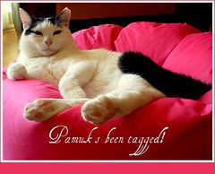 Pamuk's been tagged (sevgi_durmaz) Tags: friends animal cat photo tagged flickrfriends mywinners bestofcats anawesomeshot boc0310 taggedcats